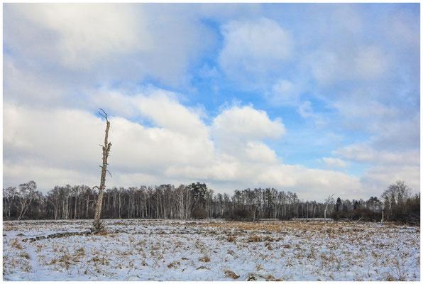 Landschaft im Pfrunger-Burgweiler Ried 5505