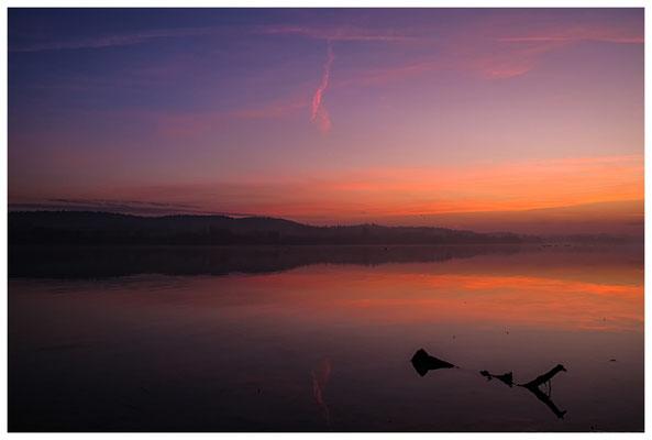 Morgendämmerung an der Mettnauspitze mit Blick auf das Allensbacher Ufer 2814