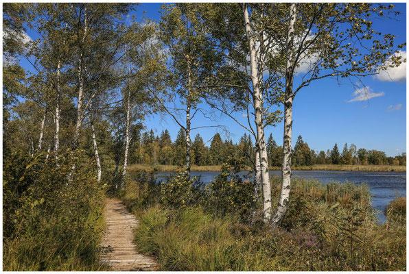 Uferlandschaft mit Moorbirken am Großen Riedsee 3759