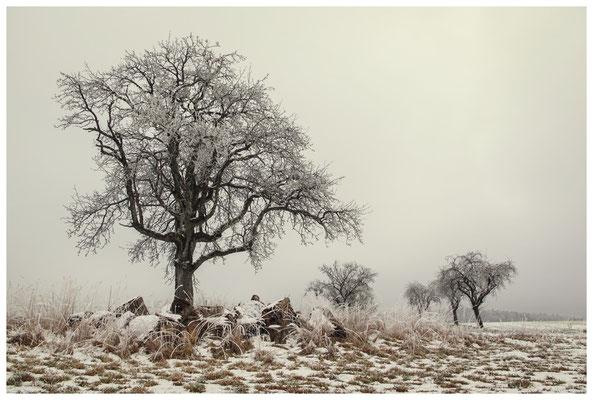 Winterliche Streuobstwiese mit Raureif 2530