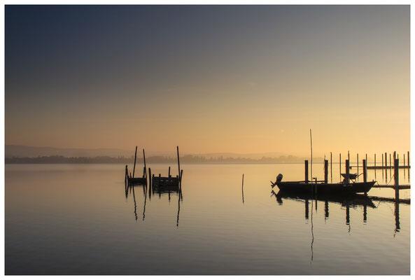 Fischreusen und Fischerboot bei Iznang im Morgenlicht 3347
