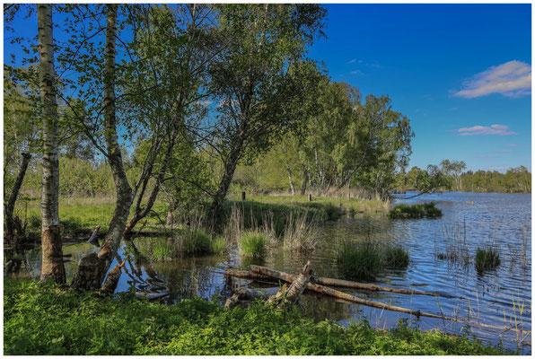 """Uferlandschaft Moorsee mit """"Biberbissspuren"""" 7397"""