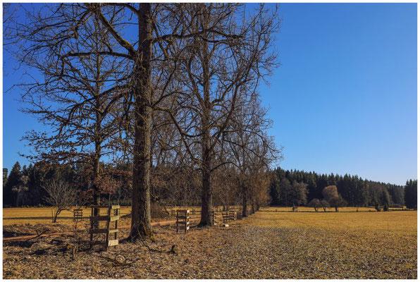 Landschaft im Unterhölzer Wald 6231