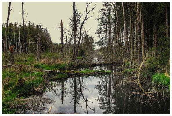 Moor, Seen und Bannwald 3649