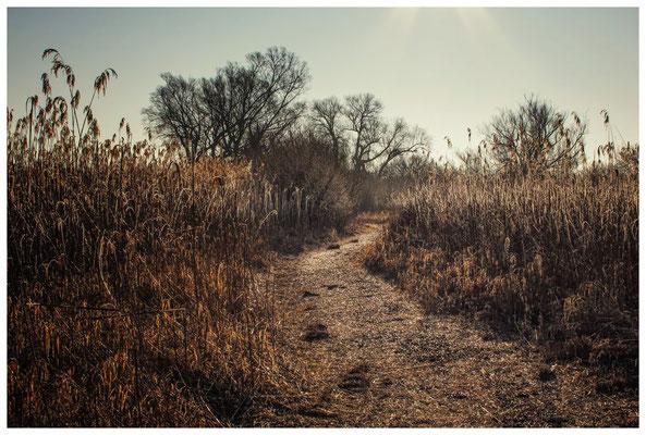 Naturschutzgebiet Mettnau 2790