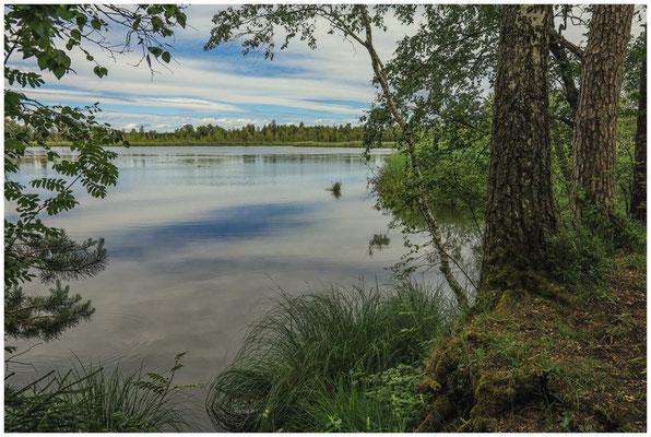 Großer Riedsee im Wurzacher Ried 3163
