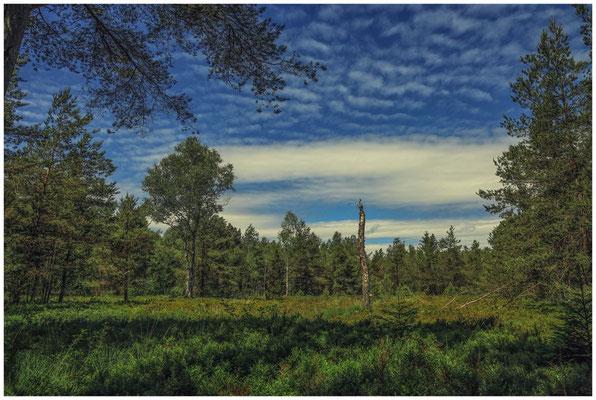Landschaft im Wurzacher Ried 3226