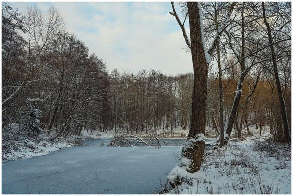 Waldweiher bei Münchhöf 5451