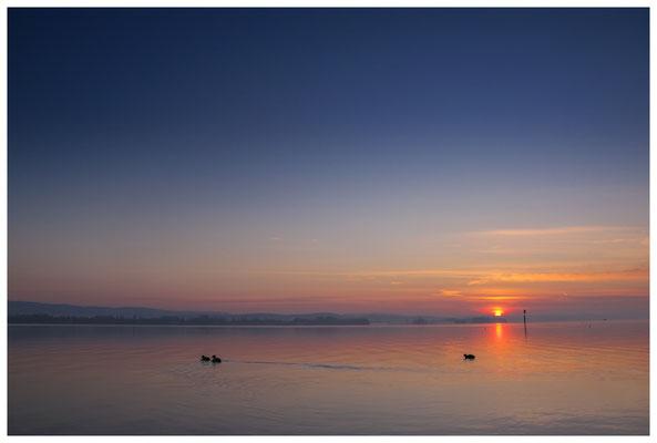 Sonnenaufgang im Jachthafen Iznang 3253