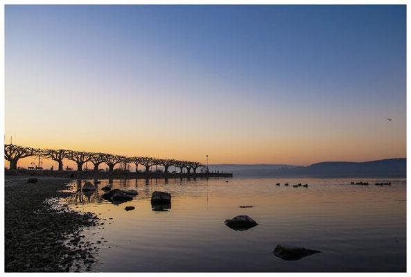 Morgendämmerung an der Radolfzeller Mole - mit Blick auf die Halbinsel Höri 2701