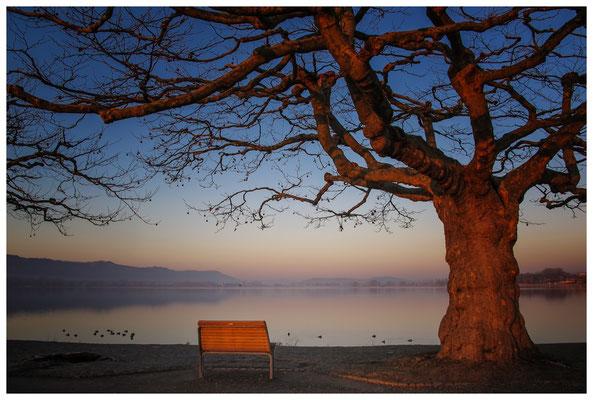 Radolfzeller Mole im Morgenlicht mit Blick auf die Halbinsel Höri 2737