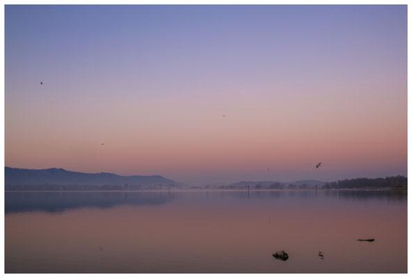 Morgendämmerung an der Radolfzeller Mole - mit Blick auf die Halbinsel Höri 2659