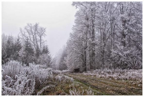 2099 Winterlandschaft in der Nähe vom NSG Heudorfer Ried