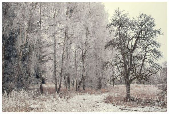 Winterlandschaft im Hegau bei Stockach 2414