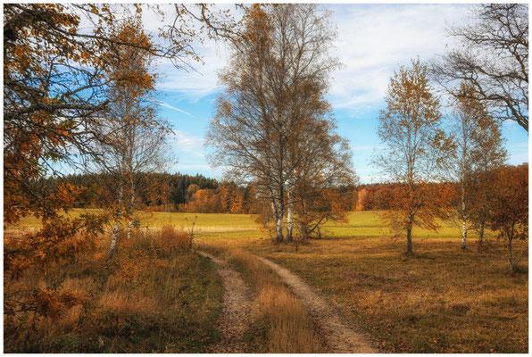 Landschaft im NSG Irndorfer Hardt 1350