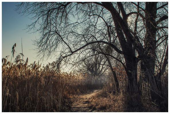 Naturschutzgebiet Mettnau 2787