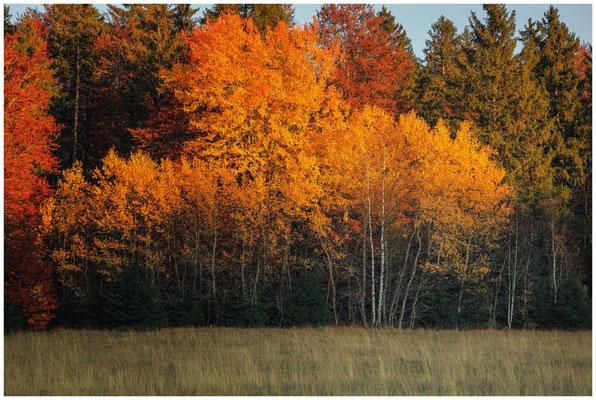 Herbst im Irndorfer Hardt 4618