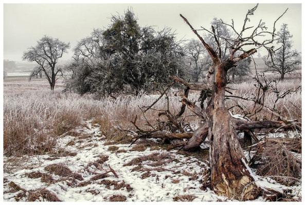 Winterliche Streuobstwiese bei Stockach 2440