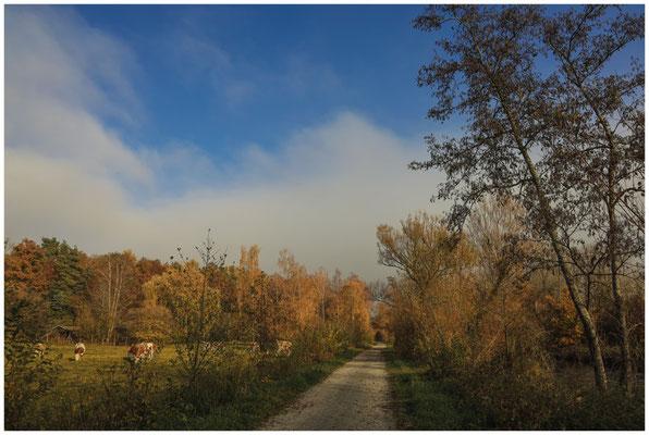 Fußweg zwischen Beuren und Hausen 4779