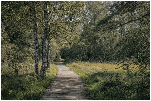 Auf Bohlenwegen durch das Wurzacher Ried 3911