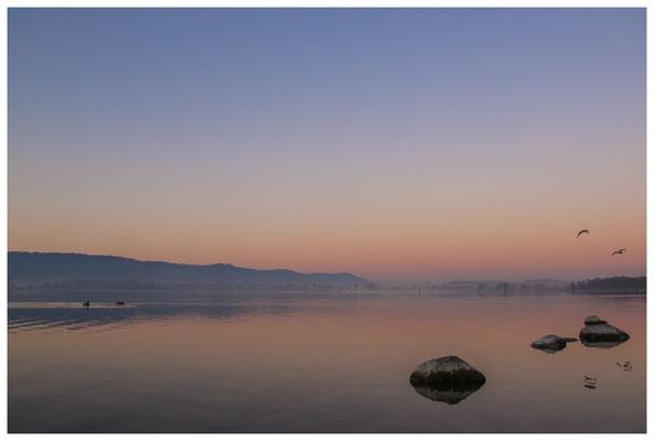Morgendämmerung an der Radolfzeller Mole - mit Blick auf die Halbinsel Höri 2689