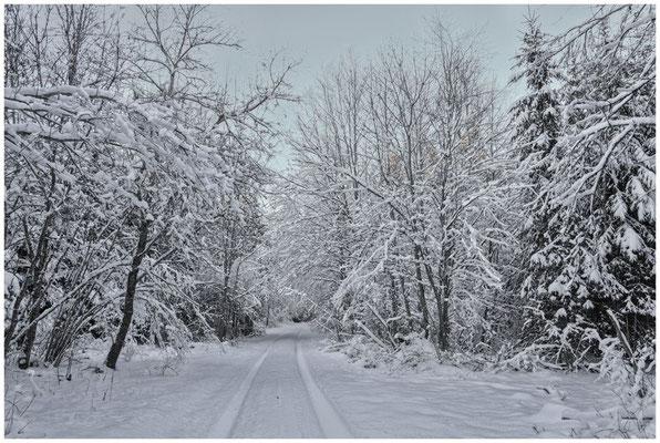 Verschneiter Winterwald bei Burg Wildenstein 5844