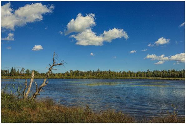 Uferlandschaft Großer Riedsee im Wurzacher Ried 3757