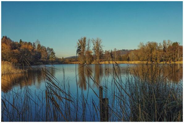 Uferlandschaft Böhringer See 1563