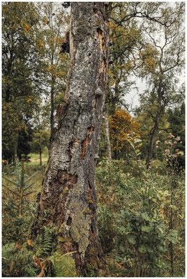 Totholz mit Baumpilzen 8560