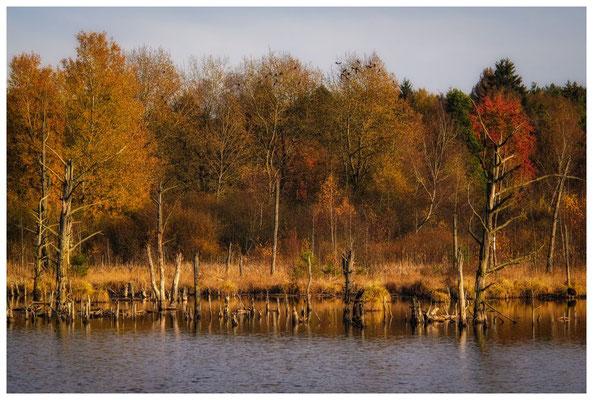 Uferlandschaft Schwenninger Moos 1805