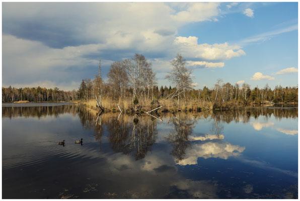 Uferlandschaft Großer Vogelsee 2153