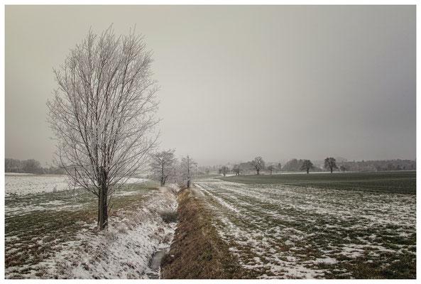 Winterlandschaft mit Raureif bei Stockach 2552