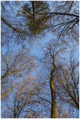 Baumkronen im Sonnenlicht 1579