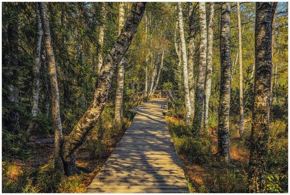 Bohlenwege führen am Wildsee vorbei durch das Moor 4300