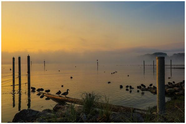 Nach Sonnenaufgang am Zeller See in Moos 3518