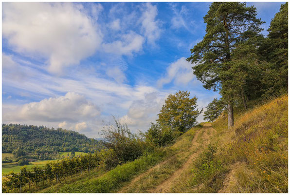 Wanderweg beim Weinanbaugebiet Elisabethenberg 8181