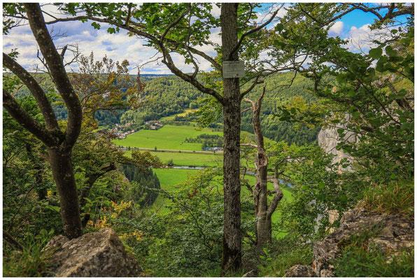 Blick vom Schaufelsen auf Neidingen und die Donau 8020
