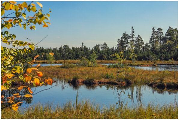 Uferlandschaft Wildsee 4311