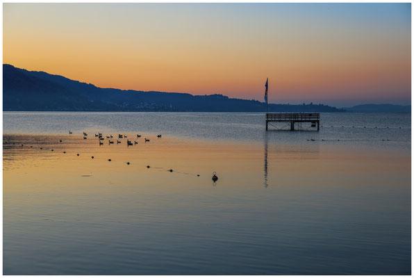 Blick auf den Überlinger See mit Sprungturm vom Strandbad Bodman mit Graugänsen 0118