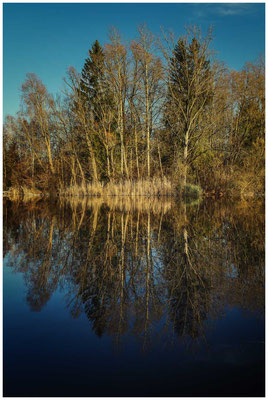 Uferlandschaft Böhringer See 1570