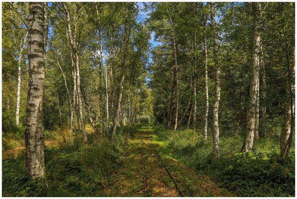 Schienen für's Torfbähnle im Wurzacher Ried  3847