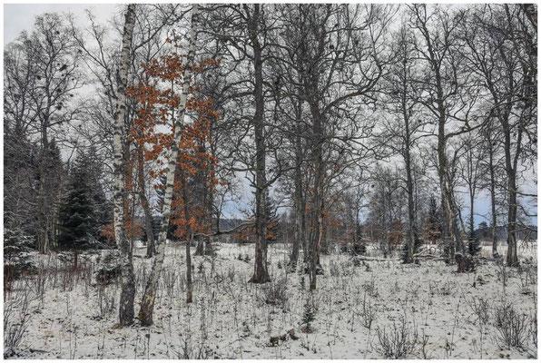 Landschaft im Irndorfer Hardt 5368