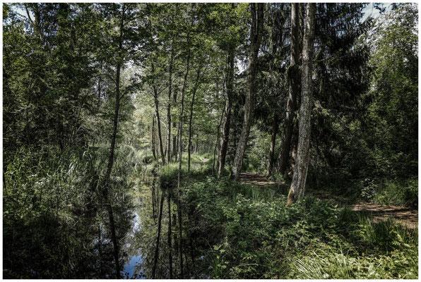 Wassergraben im Wurzacher Ried 3224