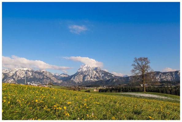Frühlingswiese mit Alpen