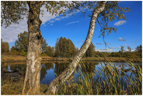 Uferlandschaft Schwenninger Moos 4100