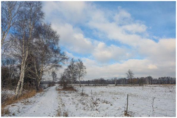 Wanderweg durch das Pfrunger-Burgweiler Ried 5518