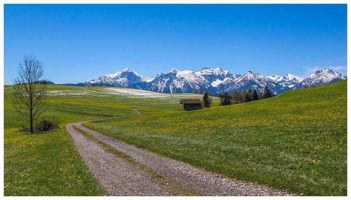 Frühlingswiese im Allgäu  - teilweise mit Schnee ;-)
