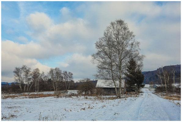 Wanderweg mit Holzhütte im Pfrunger-Burgweiler Ried  5546