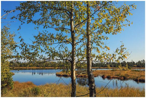 Uferlandschaft Wildsee 4322