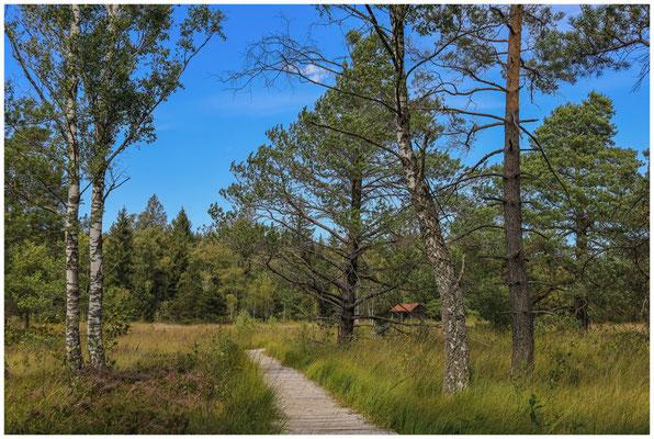 Bohlenweg im Wurzacher Ried mit Torfhütte 3851